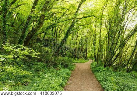 Wild temperate forest path at springtime . Cenac, Gironde, France .