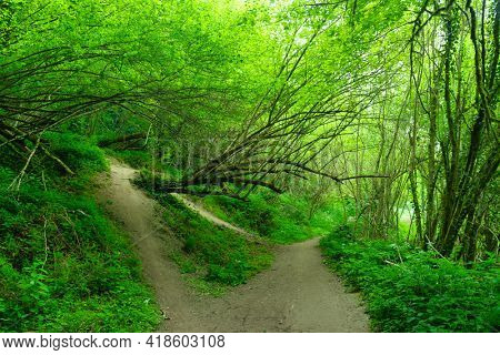 Path under a fresh green forest at spring, Cenac, Gironde, France