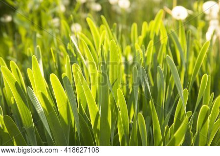 Image Of The Bright Green Grass Close Up
