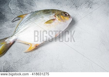 Fresh Raw Fish Pompano On Kitchen Table. White Background. Top View. Copy Space