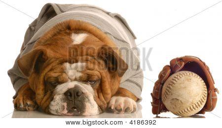 Bulldog Wearing Sweatsuit With Baseball Glove