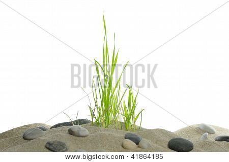 Dune With Grass