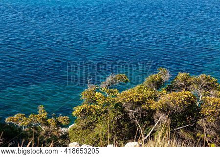 Vegetation Next To The Sea, Stara Baska, Krk Island. Croatia