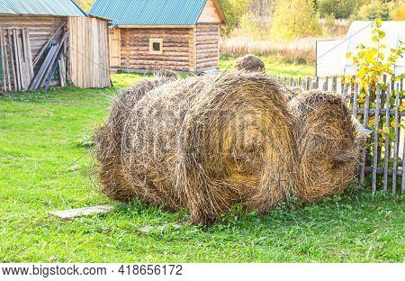 Harvested Round Bales Of Hay For Cattle At The Farmland