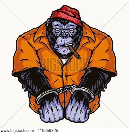 Handcuffed Gorilla In Orange Prisoner Uniform Smoking Cigar In Vintage Style Isolated Vector Illustr