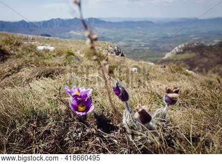 Green Valley Nature Landscape. Mountain Purple Flower Landscape. Springtime In Mountain Landscape. M