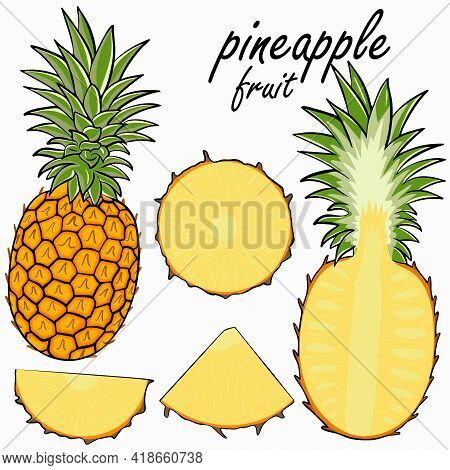 Pineapple Fruit Set. Vector Collection Of Exotic Fruits. Whole, Half And Pineapple Wedges. Hand-draw