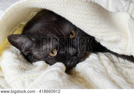 Cute Black Cat Sleeps Covered With Warm Blanket