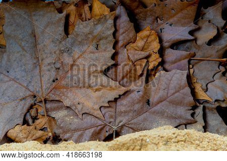 Background Of Dry Maple And Maple Leaves. Vegetable Background. Standard. Maple Tree Leaves. Autumn