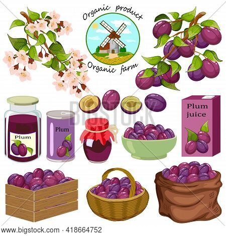 Set With Plums And Products From Them.branches With Plums, Plum Products On A White Background In Ve