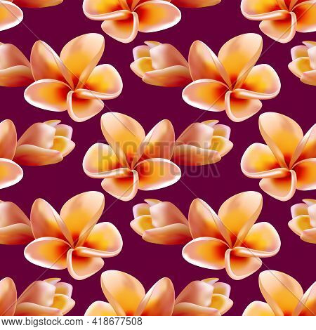 Plumeria Or Frangipani Flowers Summer Dress Vector Seamless Pattern. Tropical Flowering Plant, Tree