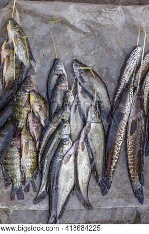 Fresh Catch Of Freshwater Fish For Sell At The Street Food Market Near The Inle Lake In Burma, Myanm