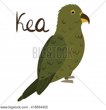 Kea Parrot In Cartoon Style On White Background. Vector Hand Drawn Illustration. Nestor Notabilis.