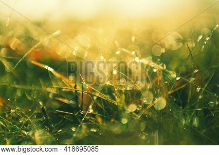 Green Grass With Morning Dew At Sunrise. Macro Image, Shallow Depth Of Field. Blurred Summer Nature