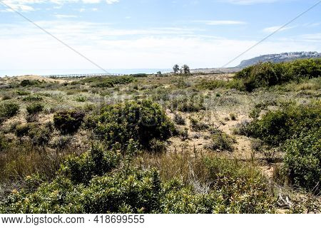 Beautiful Landscape Of Dunes And Vegetation In Arenales Del Sol Beach In Alicante, Southern Spain
