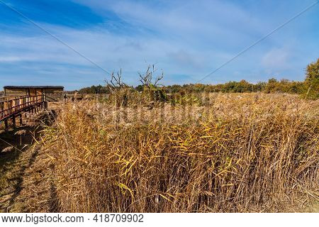 Tablas De Daimiel National Park, Biosphere Reserve Since 1981, Castilla La Mancha, Spain