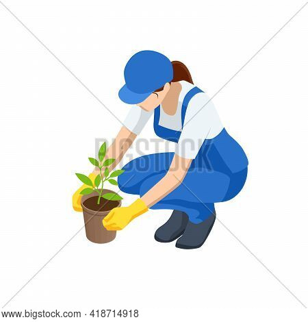 Agricultural Work. Isometric Seedling Transplanting Process. Young Vegetable Seedlings Of Transplant