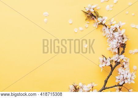 Spring Background Table. May Flowers And April Floral Nature On Pink. For Banner, Branches Of Blosso