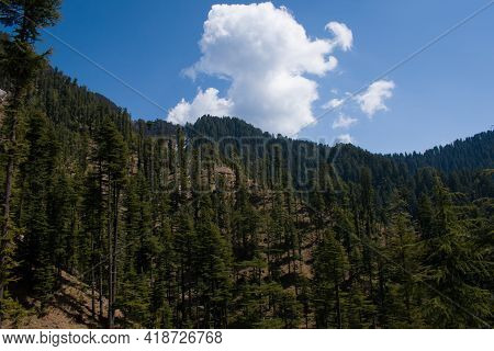Beautiful Valley Landscape Covered With Green Deodar (himalayan Cedar) Trees In Himachal Pradesh, In