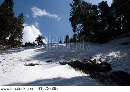 Outdoor High Altitude Himalayan Cedar Trees On Slope And Snow In Summer