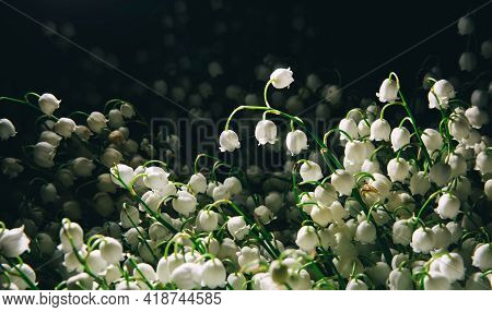 Banner With Large Fresh Beautiful Bouquet Of White May-lily Or Lilies Of The Valley In Rain Drops Is