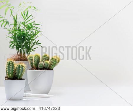 Horizontal House Gardening Composition With House Plant, Cactus, Succulent On A White Background Wit