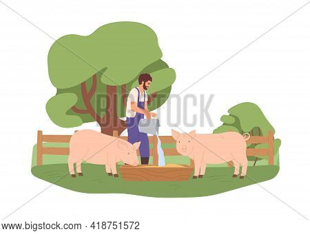Agrarian Pouring Water From Bucket Into Wooden Trough For Pigs. Young Farmer Feeding Domestic Swines
