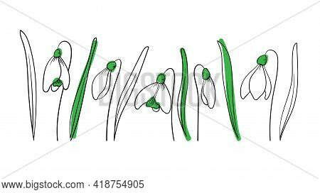 Set Of Snowdrops In Outline Style With Spot On Isolated Background. Springing The First Flowers To C