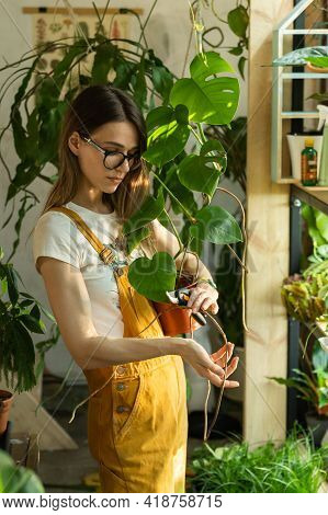 Work In Home Garden: Female Florist Cutting Of Withered Houseplant Leaves With Secateurs Caring Of P
