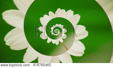 Unwinding Flower Spiral. Animation. Moving Spiral Of Delicate Flower Petals. Abstract Animation With