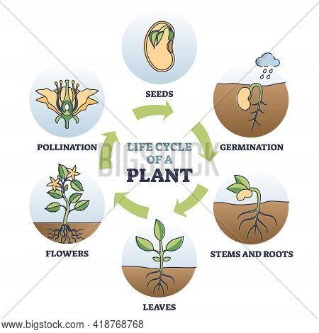 Life Cycle Of Plant With Seeds Growth In Biological Labeled Outline Diagram. Educational Flower Agri
