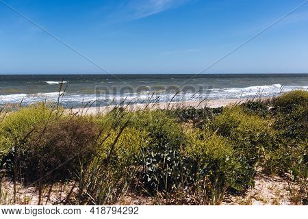 Seaside Landscape With Green Plants At The Beach, Wild Beautiful Nature Background, Azov Sea, Ukrain