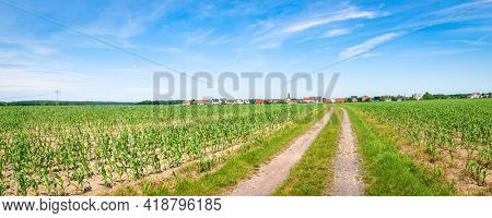 Panorama of an agricultural field with a path. Green grassy meadow with dirt road and clear sky, panorama