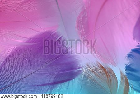 Feathers Texture. Pink, Blue And Purple Feathers Set .feathers Multicolored Beautiful Background.fea