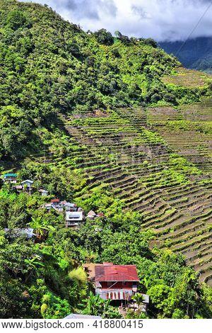 Rice Paddies Landscape In Philippines. Rice Terraces In Batad, Philippines.