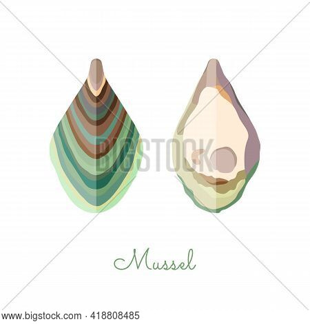 Open Mussel Shells Made In Flat Style. Colored Mussel Without Outlines, With Geometrical Shadows. Fr