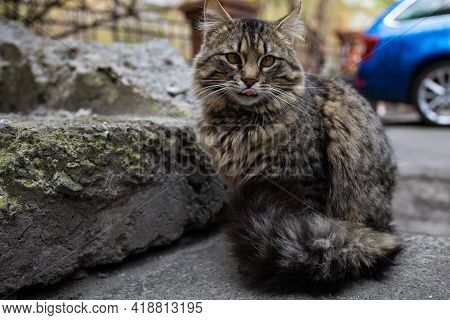 Stray Cats. Homeless And Hungry Street Cats