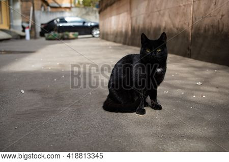 Mean Stray Black Cat Looking Suspicious At Camera. Unfriendly Abandoned Cat