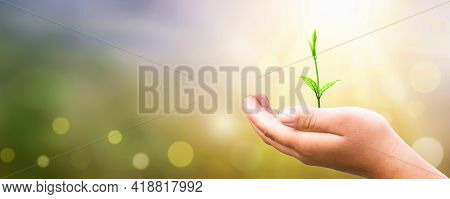 World Environment Day Concept: Human Hand Holding Small Tree Over Blurred Agriculture Field Backgrou