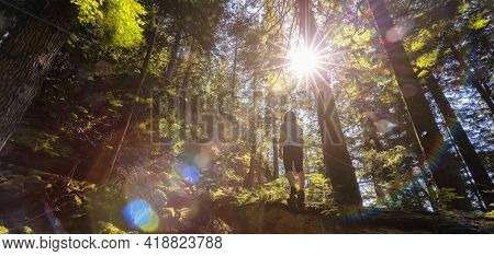 Adventurous Woman Hiking On A Fallen Tree In A Beautiful Green Rain Forest During A Sunny Spring Day