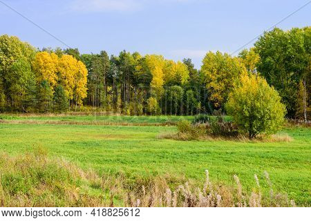 Rural Russia. Beautiful Autumn Landscape. Picturesque Green Meadow With Forest, Leningrad Region, Ru