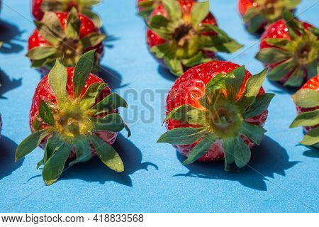 Pattern Of Ripe Red Strawberries With Green Leaves Lined Up On Blue Background In Daylight.tasty Sea