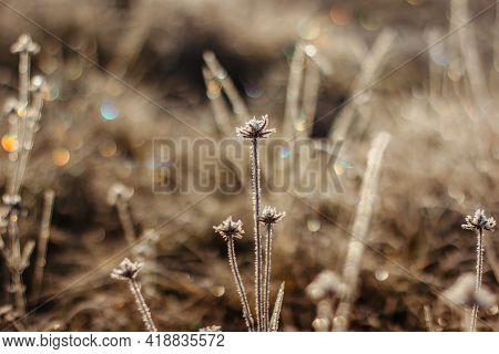 Cold Frosty Winter Morning.dry Frozen Plants On Meadow Natural Outdoors Bokeh.blurry Nature Backgrou