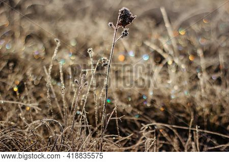 Cold Frosty Winter Morning.dry Frozen Grass On Meadow Natural Outdoors Bokeh.blurry Nature Backgroun
