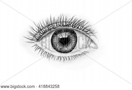 Hand-drawn Human Eye On White Background. Art Illustration Black And White Pencil Drawing