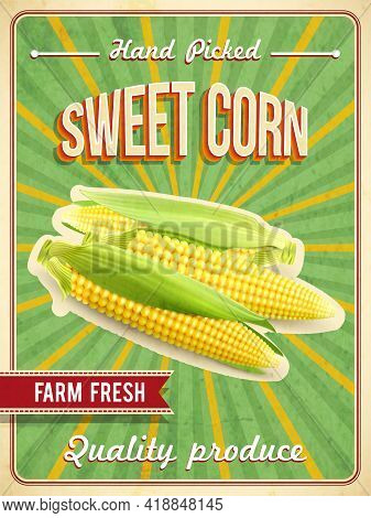 Sweet Farm Fresh Corn Poster With Corn-cobs Realistic Vector Illustration