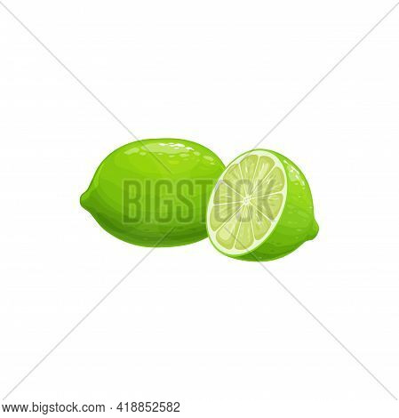 Tropical Exotic Lime Fruit Isolated Food Icon. Vector Lime Half Cut And Whole, Tropic Farm Juicy Fru