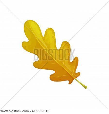 Oak Leaf, Autumn Tree Fall Isolated Leaves Foliage, Isolated Vector Icon. Autumn Forest Foliage, Dry