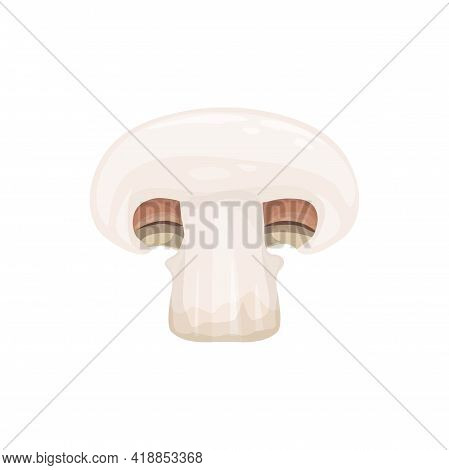 Champignon Small Edible Mushroom With White Cap Cut On Half Or Sliced Isolated 3d Realistic Icon. Ve