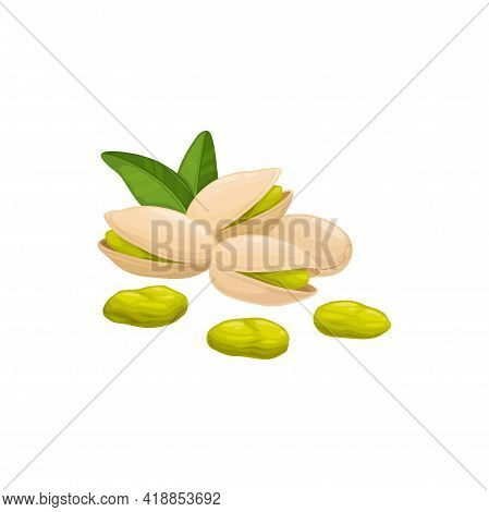 Pistachio Nut In Shell Isolated Food Snack Peeled And Unpeeled, Green Leaves. Vector Vegetarian Natu